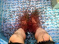 Fish Spa dengan Garra rufa