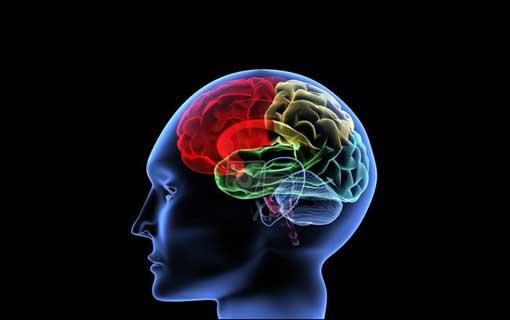 Melatih Otak untuk Pertajam Ingatan
